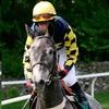 Ставки на скачки - Lucky Horse