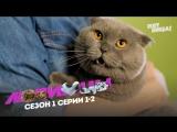 Сериал «Любимцы» — 1 и 2 серия (HD) Премьера!