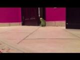 Зловещий смех попугая(lord video)