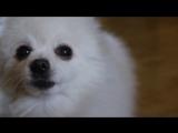 Мой ремикс на собаку по кличке Гейб.