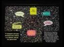 Сурдин В.Г. Лекция 9. Звёзды. Наблюдения.