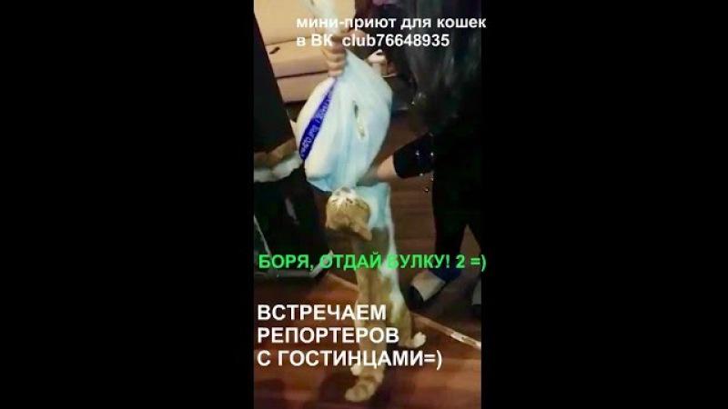 Боря, отдай булку 2! =) Boris, give me the bred -2? sequel, continuation