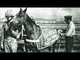 Staff Sergeant Reckless  Marine Corps War Horse - Hero