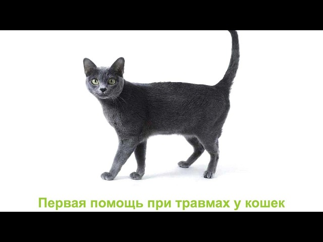 Первая помощь при травмах у кошек. Ветеринарная клиника Био-Вет.