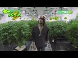 Wiz Khalifa's Weed Farm (Official Trailer) (#NR)