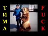 Ничего необычного,медведь показывает фак