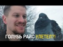 голубь Райс УЛЕТЕЛ
