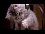 Смешные кошки и коты     -  водоплавающие киски
