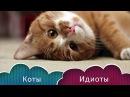 Приколы с котами - смешные котики и кошки 2017