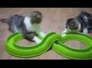 4 Приколы коты кошки ор ржака пушистики киски 4