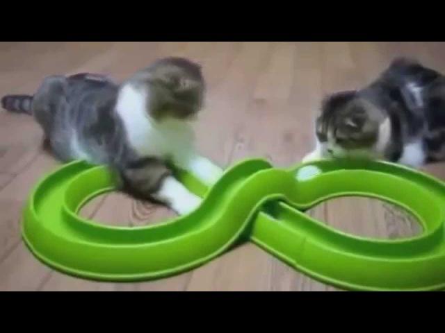 4Приколы коты кошки ор ржака пушистики киски4