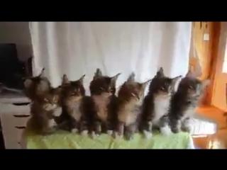 Кошки танцуют - прикол,ржака )