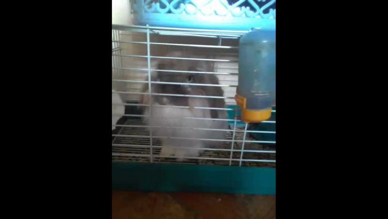 Пухлик заяц