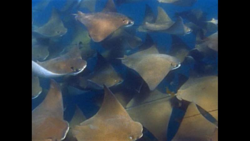 BBC Голубая планета. Открытый океан - BBC The Blue Planet. Open ocean (2001)