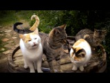 Nada Surf Meow Meow Lullaby (Official Video)