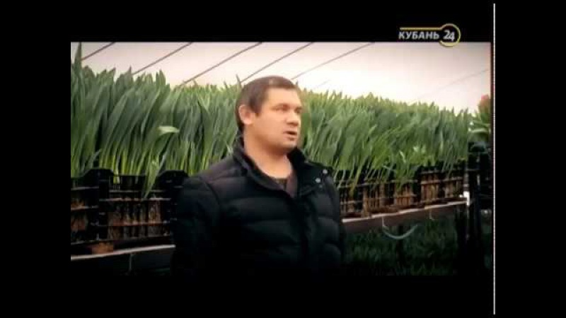 Тюльпаны выращивание , заказ луковиц www.beltulpan.ru