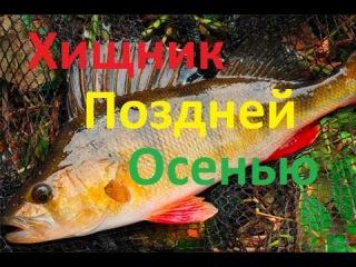 Ловля хищника на съедобные силиконовые приманки в ноябре.Осенняя Рыбалка.Рыбалка в Ирландии