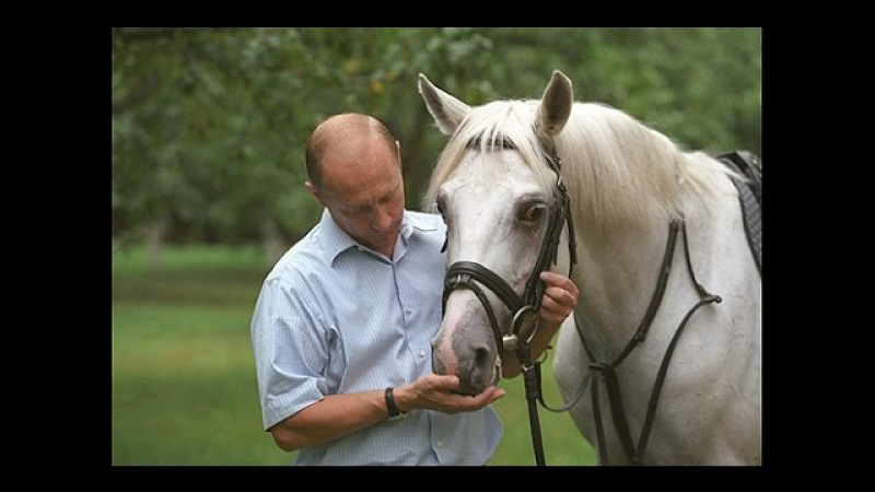 Мурзилки Int пародия Три белых коня из к ф Чародеи