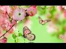 🌷 The Beauty Of Spring 🌷 Giovanni Marradi - Prelude