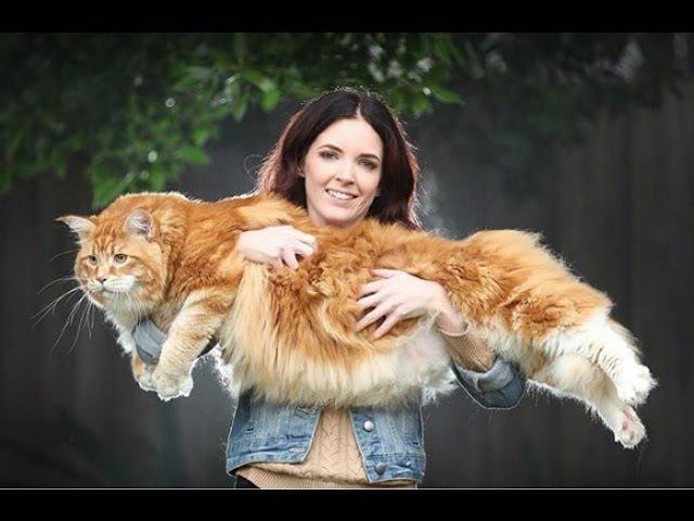 Пара купила обычного рыжего котенка, и вот каким он стал!