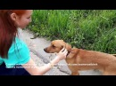 Счастливая собака из приюта едет в новый дом Радостно до слез когда животные нах