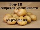Картофель выращивание 10 секретов повышения урожайности картофеля