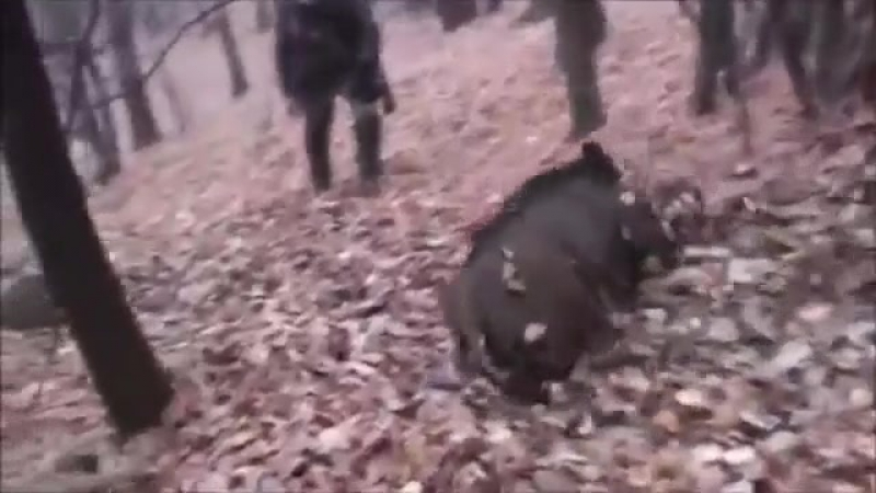 ULTIMATE Wild Boar Hunting Compilation of shooting - Chasse au sanglier Caccia Cinghiale Caza Jabali (online-video-cutter.com)