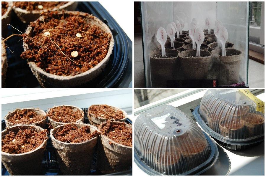 Выбираем емкости для посадки семян на рассаду, часть 2