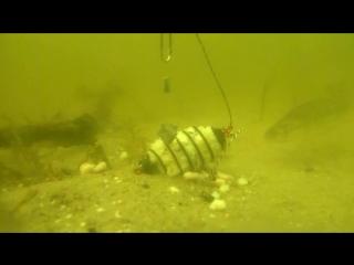 Как реагирует рыба на УБИЙЦУ КАРАСЯ.Подводные съемки