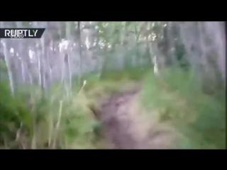 Как реагируют на медведя американцы и русские