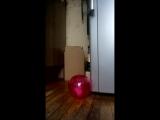 новый шарик Стерта . любопытной варваре на базаре нос оторвали .