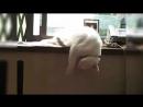 Мой кот- ИДИОТ
