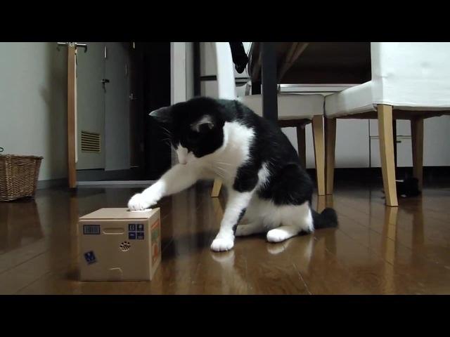 Cat VS Useless Box