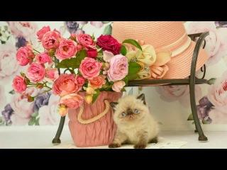 Walts of Roses Eugen Doga