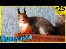 Смешные животные Подборка СМЕШНЫЕ видео про животных HD