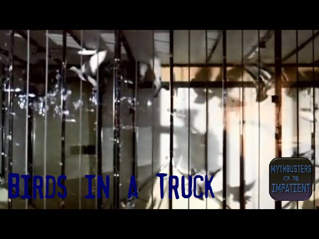 Birds in a Truck - Mythbusters for the Impatient