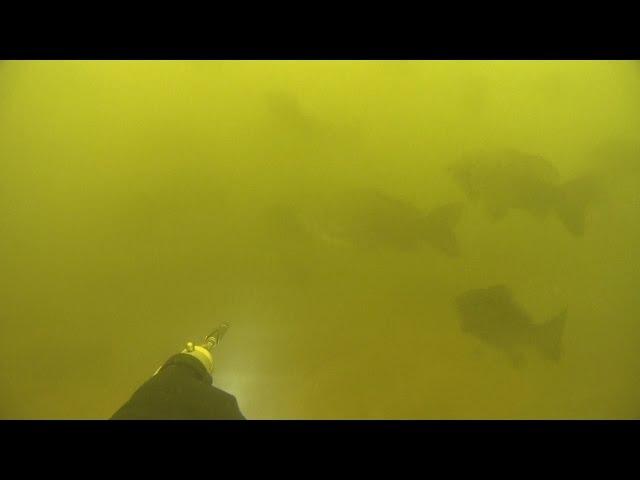 Подводная охота в Дельте Волги. Март 2017.Пустые трофейные места.