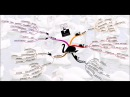 Нассим Талеб. Чёрный лебедь. Под знаком неопределённости.