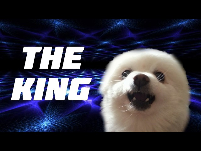 Gabe the Dog (Wellski – The King)