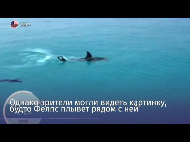 Фелпс проиграл заплыв большой белой акуле