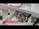 Кота, який надзюрив у цукор, всиновила працівниця супермаркету