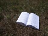 Август, травы, ветер и Её книга