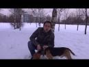 Отзыв о применении Лактис Зоо от владельца бигля Андрея