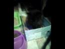 кошка матрёшка 2