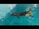 купание с Клёпой