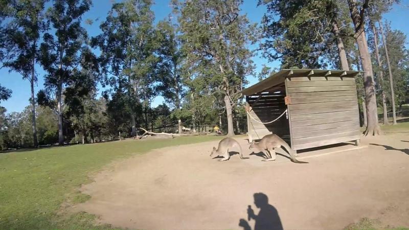 Kangaroo, Wombats and Koalas