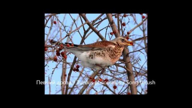 Какие птицы улетают на зиму, а какие остаются зимовать на родине