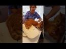Кот спасает кота от ветеринара