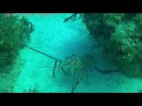Odisey from Andrey, Cuba 2017, Cayo-Coca Scuba-Diving