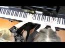 Е Дога Вальс из кинофильма ' Мой ласковый и нежный зверь ' Фортепианный дуэт